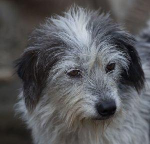 adopt dog beba
