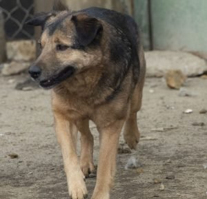 denito dogs for adoption