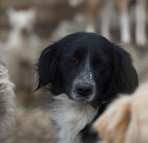 melisa dogs for adoption